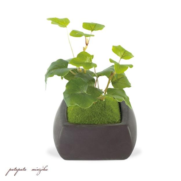画像1: オオバコ 和盆栽 苔玉 アーティフィシャルグリーン